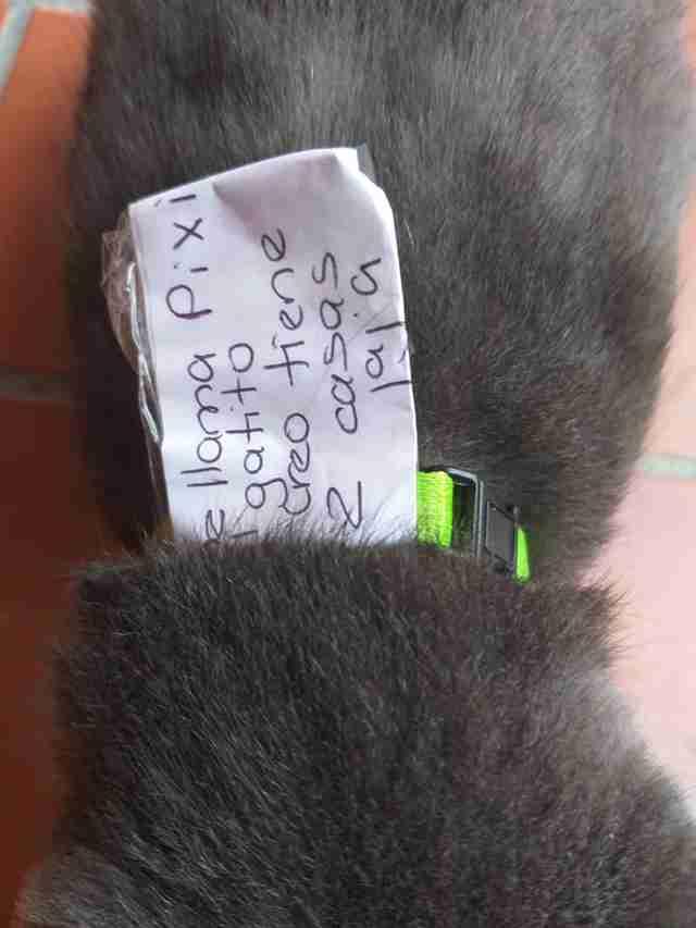 愛貓突然變胖還多了新項圈?她做這件事曝「驚人真相」...這貓居然有雙重身分!